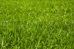 Rough lawn close up Stock Image