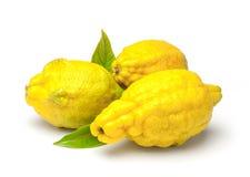 Rough lemon (Citrus jambhiri Lush.) Royalty Free Stock Photo
