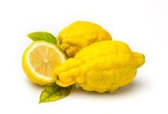 Rough lemon (Citrus jambhiri Lush.) Stock Photos