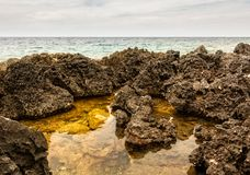 Rough limestone shore with tidal pools Stock Photos