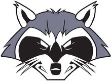Rough Mean Cartoon Raccoon Mascot Head. Vector cartoon clip art illustration of a rough tough and mean looking raccoon mascot head or face vector illustration