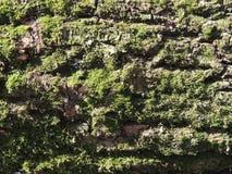 Rough mossy bark Stock Photos