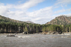 Rough mountain river Katun in the Altai region. Wild mountain river in Altai Krai Stock Photos