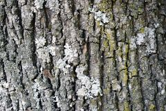 Rough natural texture for background - tree bark. Detailed texture effect stock images