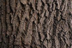 Rough natural texture. Dark brown tree bark. Brown and black color royalty free stock photos