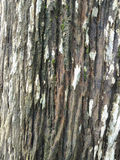 Rough old wood texture closeup Royalty Free Stock Images