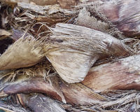 Rough palm trunk closeup Royalty Free Stock Images