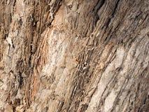 Rough Paper Bark Gum tree bark Royalty Free Stock Photo