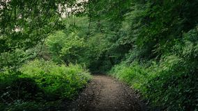 Scenic Path Through The Woods. Rough path through verdant forest stock video footage