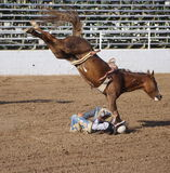 Rough Ride. Man falls off a bronc royalty free stock photography