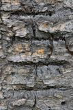 The rough and ridged bark of the old tree stock image