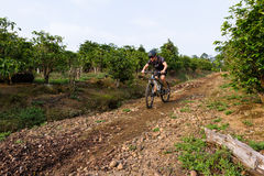 Rough riding in Costa Rica. Heredia, Costa Rica - May 08: Young man riding his mountain bike on rough roads true  coffee plantation. May 08 2016 Heredia, Costa Royalty Free Stock Photo