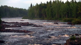 Rough river flows through the forest stock footage