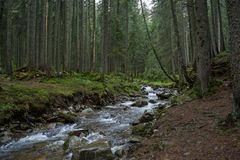 Rough river in the forest at the mountains Royalty Free Stock Image