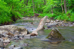 Rough River Stock Photography