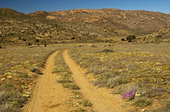 Rough road with lanes for offroad vehicles. In a semi-desert hilly landscape, Namaqualand, South Africa Royalty Free Stock Photos