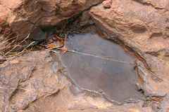 WATER AND ORGANIC DEBRIS IN A SMALL POOL ON A ROCK. Rough rust coloured textured rock with water collection in a small indentation Stock Photo