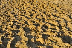 Rough sandy texture Royalty Free Stock Photography