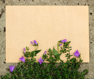 Rough sheet of paper and flowers on the pavement Stock Photography