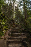 Rough stone stairs in carpathian forest Royalty Free Stock Images