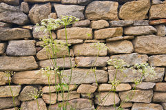 Rough stone wall Royalty Free Stock Images