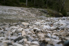Rough stony ground in a forest Stock Photo