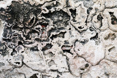 Rough Stucco Background Royalty Free Stock Images