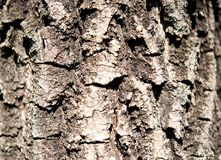 A rough texture of bark on an oak tree. stock images