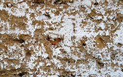 Rough texture. Clay wall with the remnants of whitewash Royalty Free Stock Photos