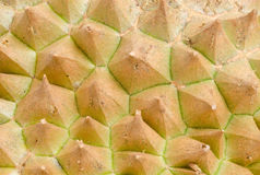 Rough texture of durian skin with thorns Royalty Free Stock Image