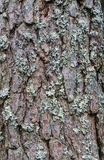 Rough texture of fir bark with lichen stock images