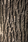 Rough texture of tree Royalty Free Stock Photos