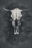Rough textured background grey colour with bull skull in center Stock Photography