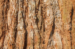 Rough tree bark Stock Images