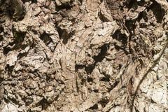 Rough tree bark Stock Photo