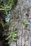 Tree bark. Rough tree bark horizontal format stock image