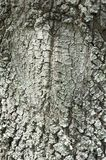 Rough tree bark with pattern Royalty Free Stock Images