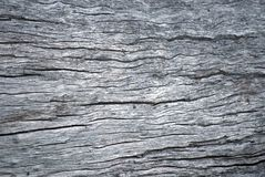 Rough tree trunk surface. With many small cracks Stock Photos