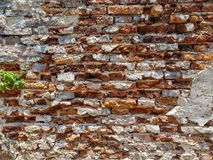 Rough vintage uneven brick wall with broken white plaster paint wall and green plant copyspace background Stock Photo