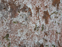 Rough wall texture Stock Images