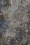 Rough weathered surface of a tree stump. Rough weathered surface of an old tree stump Stock Images
