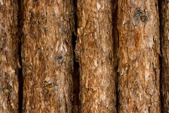 Rough wood background Stock Photography
