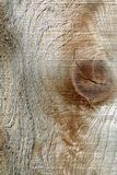 Rough Wood Grain. With a knot and lots of texture Royalty Free Stock Image
