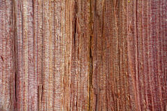 Rough wood grain, Juniperus Virginiana Stock Images