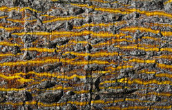 Rough wood texture. Wood texture with yellow stripes Stock Photo