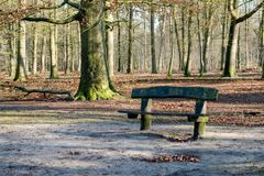 Rough wooden bench in a forest Stock Photos