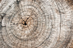 Rough wooden cut texture Stock Photos