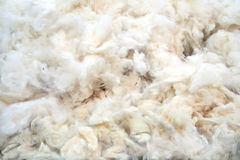 Rough wool Stock Image