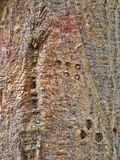 Roughly Textured Bark Pattern royalty free stock images