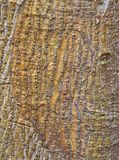 Roughly Textured Bark Pattern royalty free stock photography